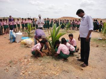 Students mulching a coconut tree
